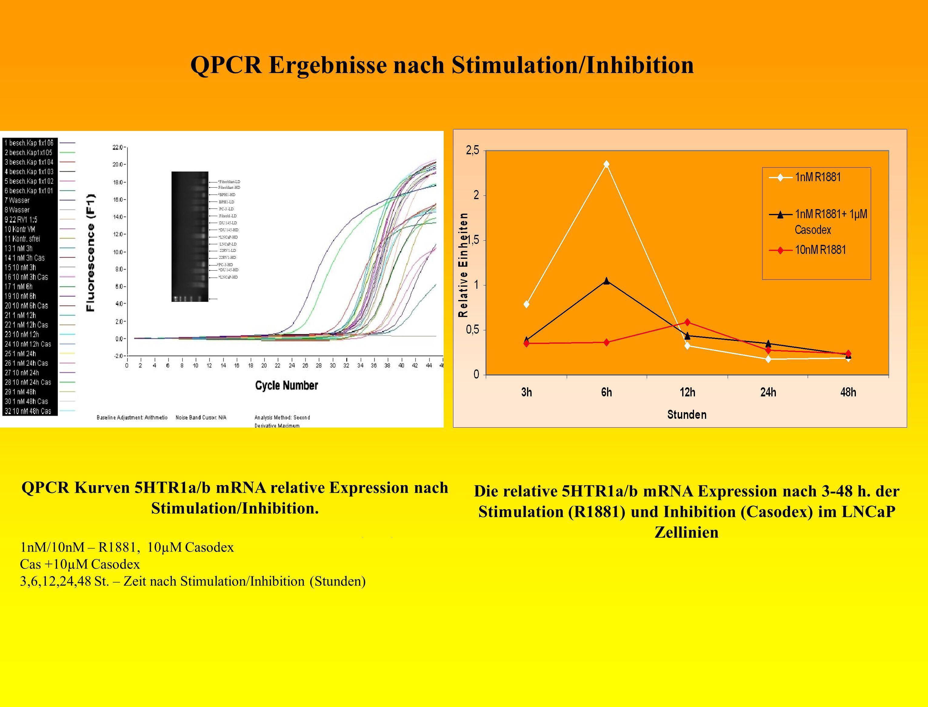 QPCR Kurven 5HTR1a/b mRNA relative Expression nach Stimulation/Inhibition. 1nM/10nM – R1881, 10µM Casodex Cas +10µM Casodex 3,6,12,24,48 St. – Zeit na
