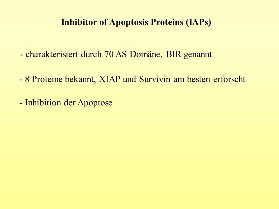 Inhibitor of Apoptosis Proteins (IAPs) - charakterisiert durch 70 AS Domäne, BIR genannt - 8 Proteine bekannt, XIAP und Survivin am besten erforscht -