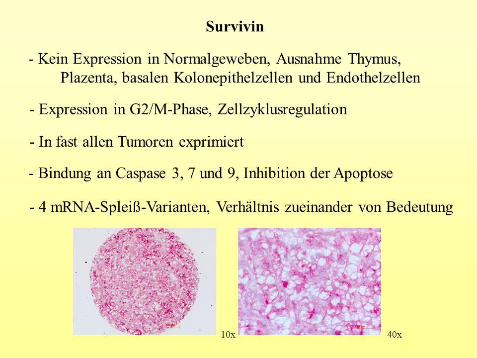 - Signifikante Korrelation mit Primär-N (p<0,01) Primär-G (p<0,01) Anzahl MS(p<0,01) Anzahl LK-MS(p<0,05) log-rank p<0,01 - Einteilung der Patienten nach Survivin-Status - Keine Korrelation mit klinischen Parametern - 88,7% der Stanzen Survivin positiv