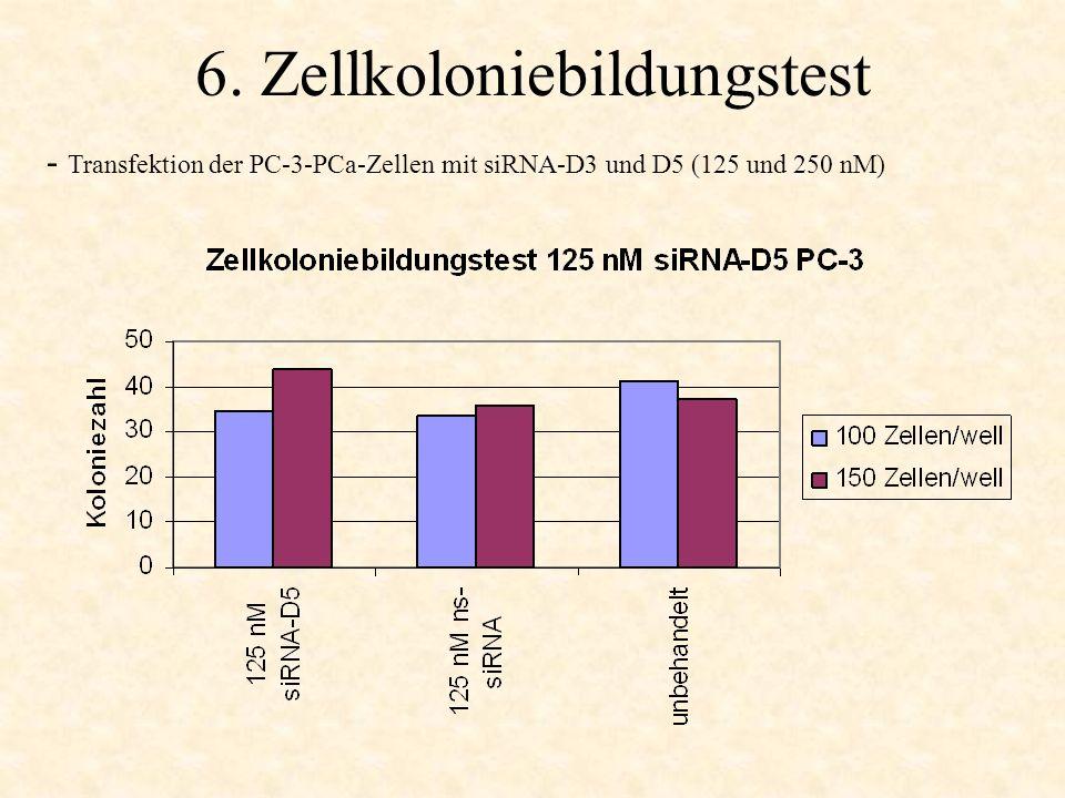 6. Zellkoloniebildungstest - Transfektion der PC-3-PCa-Zellen mit siRNA-D3 und D5 (125 und 250 nM)