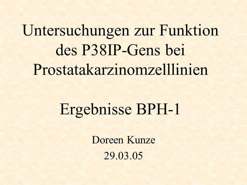 Untersuchungen zur Funktion des P38IP-Gens bei Prostatakarzinomzelllinien Ergebnisse BPH-1 Doreen Kunze 29.03.05