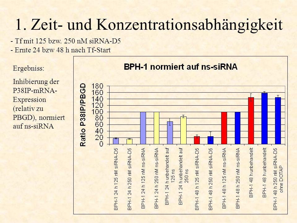 1. Zeit- und Konzentrationsabhängigkeit - Tf mit 125 bzw. 250 nM siRNA-D5 - Ernte 24 bzw 48 h nach Tf-Start Ergebniss: Inhibierung der P38IP-mRNA- Exp