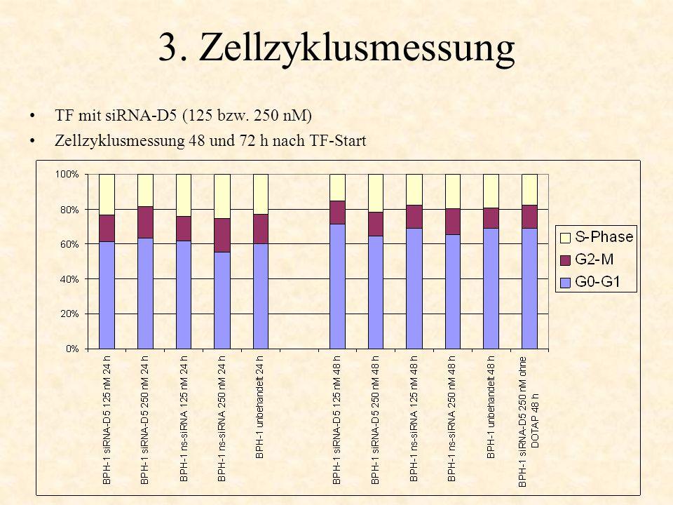 3. Zellzyklusmessung TF mit siRNA-D5 (125 bzw. 250 nM) Zellzyklusmessung 48 und 72 h nach TF-Start