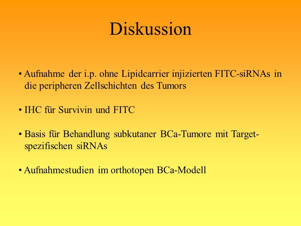Diskussion Aufnahme der i.p. ohne Lipidcarrier injizierten FITC-siRNAs in die peripheren Zellschichten des Tumors IHC für Survivin und FITC Basis für