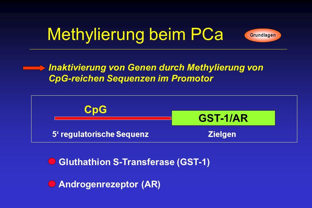 Gluthathion S-Transferase (GST-1) Androgenrezeptor (AR) Methylierung beim PCa Grundlagen Inaktivierung von Genen durch Methylierung von CpG-reichen Se