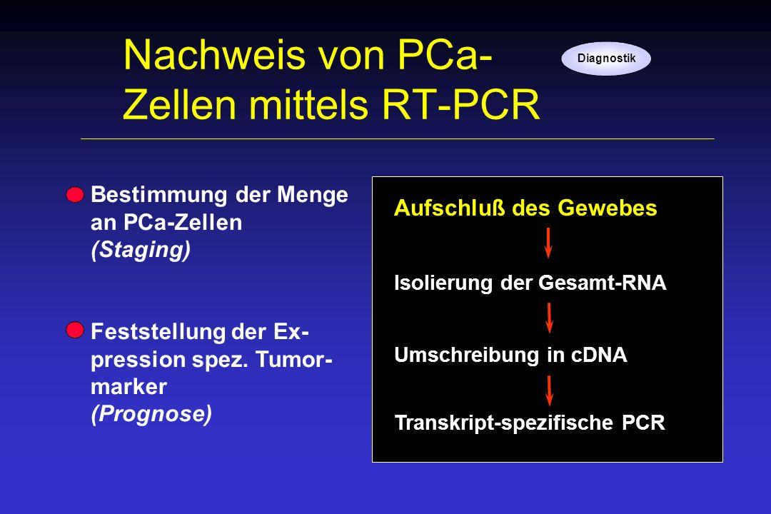 Nachweis von PCa- Zellen mittels RT-PCR Diagnostik Bestimmung der Menge an PCa-Zellen (Staging) Feststellung der Ex- pression spez. Tumor- marker (Pro