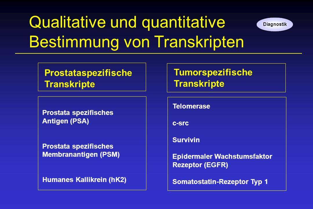 Qualitative und quantitative Bestimmung von Transkripten Prostata spezifisches Antigen (PSA) Prostata spezifisches Membranantigen (PSM) Humanes Kallik