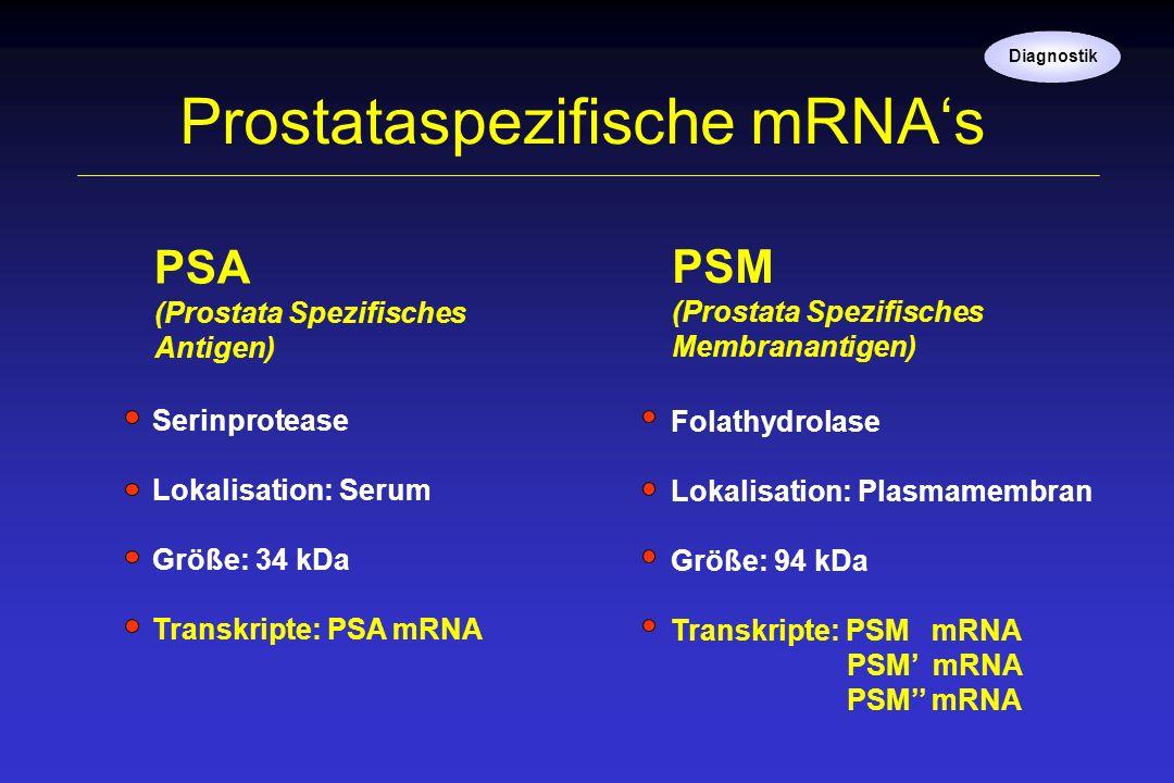 Prostataspezifische mRNAs PSM (Prostata Spezifisches Membranantigen) PSA (Prostata Spezifisches Antigen) Serinprotease Lokalisation: Serum Größe: 34 k
