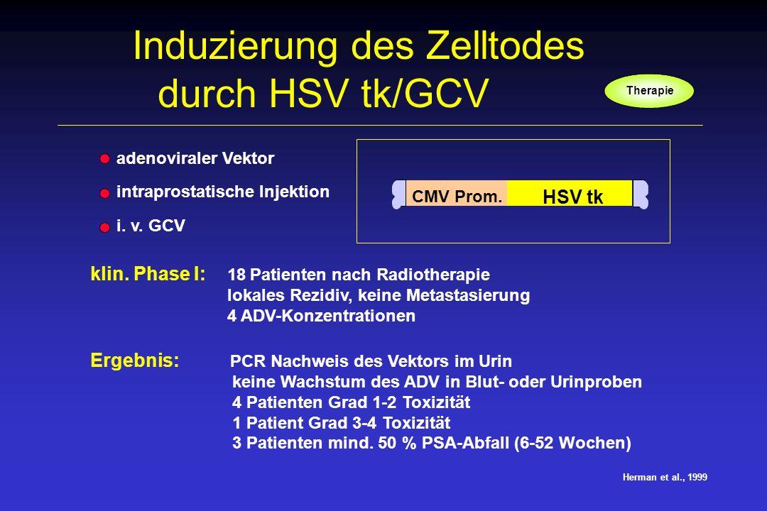 Herman et al., 1999 Induzierung des Zelltodes durch HSV tk/GCV CMV Prom. HSV tk adenoviraler Vektor intraprostatische Injektion i. v. GCV klin. Phase