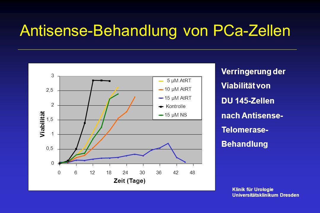 Antisense-Behandlung von PCa-Zellen Verringerung der Viabilität von DU 145-Zellen nach Antisense- Telomerase- Behandlung 0 0,5 1 1,5 2 2,5 3 061218243