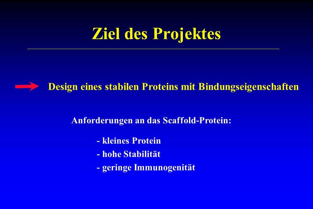 Ziel des Projektes Design eines stabilen Proteins mit Bindungseigenschaften Anforderungen an das Scaffold-Protein: - kleines Protein - hohe Stabilität