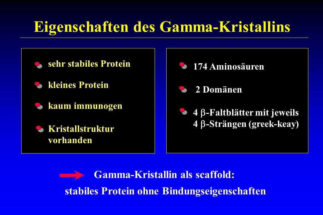 sehr stabiles Protein kleines Protein kaum immunogen Kristallstruktur vorhanden 174 Aminosäuren 2 Domänen 4 -Faltblätter mit jeweils 4 -Strängen (gree