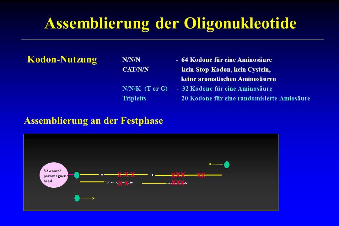 Assemblierung der Oligonukleotide X X X X X X X X X X Assemblierung an der Festphase SA-coated paramagnetic bead X X X Kodon-Nutzung N/N/N - 64 Kodone