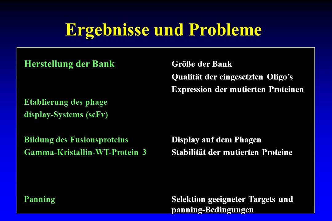 Ergebnisse und Probleme Herstellung der Bank Größe der Bank Qualität der eingesetzten Oligos Expression der mutierten Proteinen Etablierung des phage