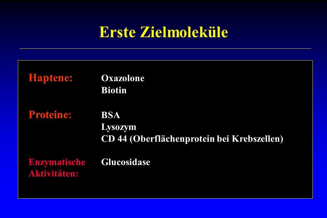 Erste Zielmoleküle Haptene: Oxazolone Biotin Proteine: BSA Lysozym CD 44 (Oberflächenprotein bei Krebszellen) EnzymatischeGlucosidase Aktivitäten: