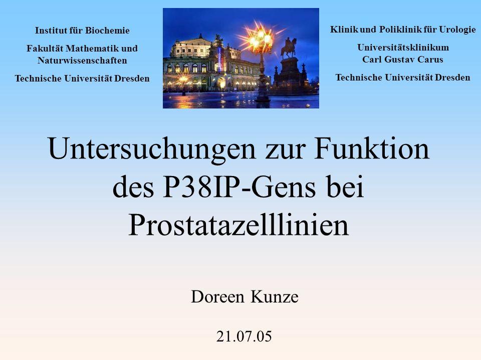 Untersuchungen zur Funktion des P38IP-Gens bei Prostatazelllinien Doreen Kunze 21.07.05 Institut für Biochemie Fakultät Mathematik und Naturwissenscha