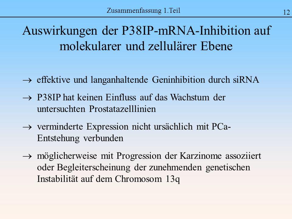 effektive und langanhaltende Geninhibition durch siRNA P38IP hat keinen Einfluss auf das Wachstum der untersuchten Prostatazelllinien verminderte Expression nicht ursächlich mit PCa- Entstehung verbunden möglicherweise mit Progression der Karzinome assoziiert oder Begleiterscheinung der zunehmenden genetischen Instabilität auf dem Chromosom 13q 12 Auswirkungen der P38IP-mRNA-Inhibition auf molekularer und zellulärer Ebene Zusammenfassung 1.Teil