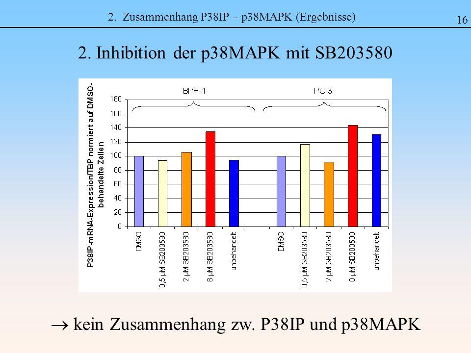 2. Zusammenhang P38IP – p38MAPK (Ergebnisse) kein Zusammenhang zw. P38IP und p38MAPK 2. Inhibition der p38MAPK mit SB203580 16