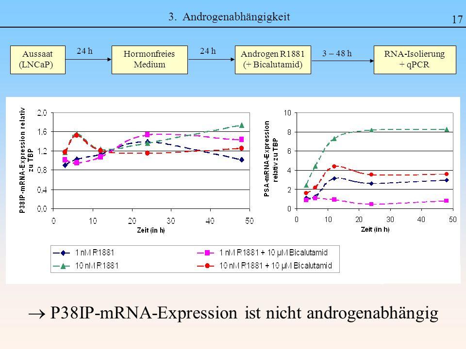3. Androgenabhängigkeit P38IP-mRNA-Expression ist nicht androgenabhängig Aussaat (LNCaP) Hormonfreies Medium 24 h 3 – 48 h Androgen R1881 (+ Bicalutam