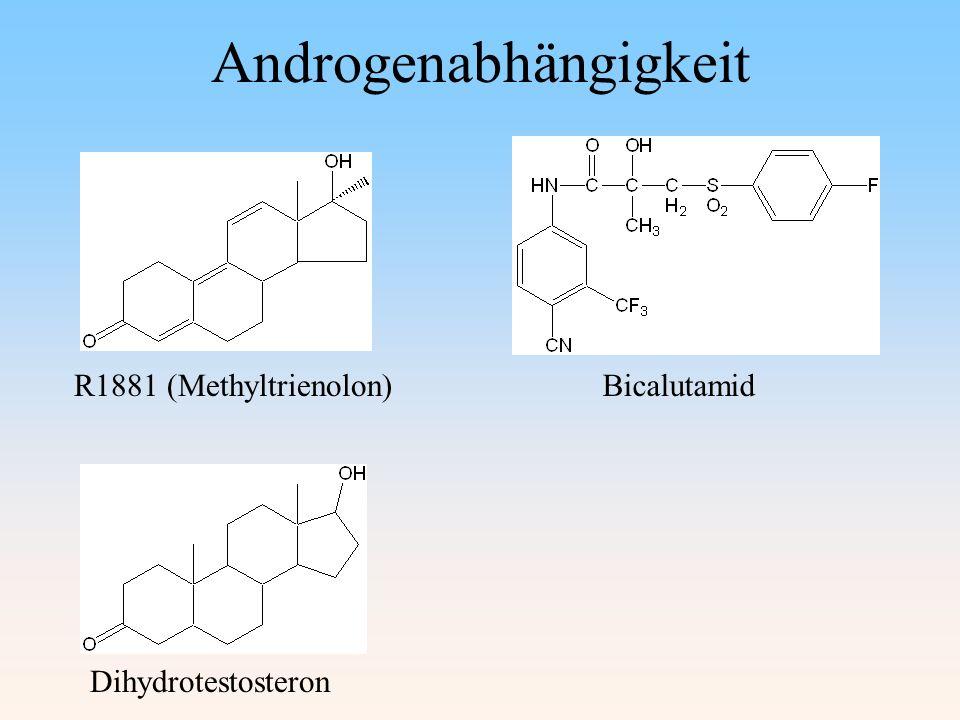 R1881 (Methyltrienolon)Bicalutamid Dihydrotestosteron Androgenabhängigkeit