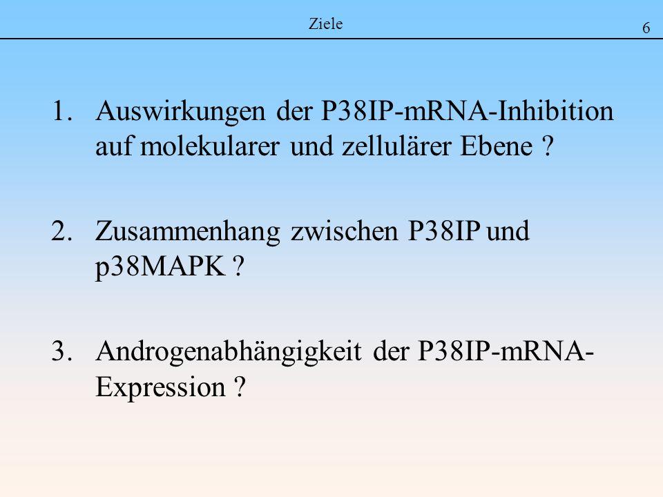 1.Auswirkungen der P38IP-mRNA-Inhibition auf molekularer und zellulärer Ebene ? 2.Zusammenhang zwischen P38IP und p38MAPK ? 3.Androgenabhängigkeit der