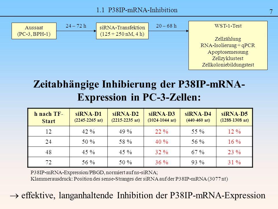 1.1 P38IP-mRNA-Inhibition h nach TF- Start siRNA-D1 (2245-2265 nt) siRNA-D2 (2215-2235 nt) siRNA-D3 (1024-1044 nt) siRNA-D4 (440-460 nt) siRNA-D5 (1288-1308 nt) 1242 %49 %22 %55 %12 % 2450 %58 %40 %56 %16 % 4845 % 32 %67 %23 % 7256 %50 %36 %93 %31 % Aussaat (PC-3, BPH-1) siRNA-Transfektion (125 + 250 nM, 4 h) 24 – 72 h WST-1-Test Zellzählung RNA-Isolierung + qPCR Apoptosemessung Zellzyklustest Zellkoloniebildungstest 20 – 68 h Zeitabhängige Inhibierung der P38IP-mRNA- Expression in PC-3-Zellen: effektive, langanhaltende Inhibition der P38IP-mRNA-Expression P38IP-mRNA-Expression/PBGD, normiert auf ns-siRNA; Klammerausdruck: Position des sense-Stranges der siRNA auf der P38IP-mRNA (3077 nt) 7