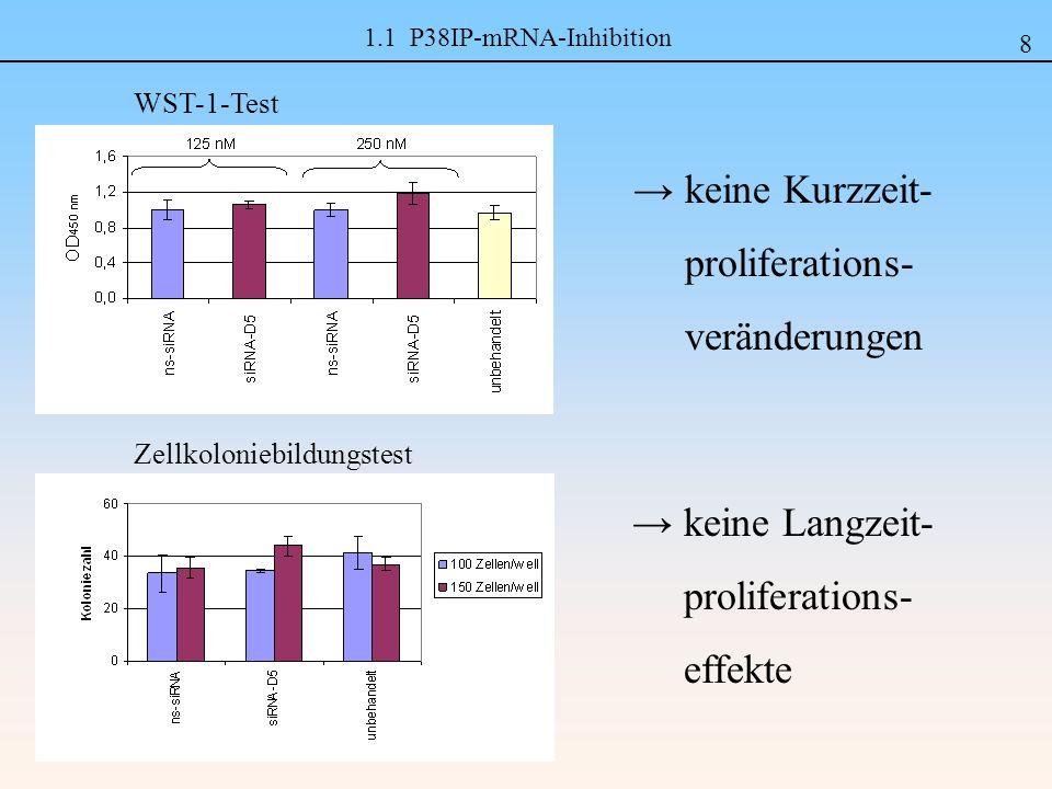 1.1 P38IP-mRNA-Inhibition Zellkoloniebildungstest WST-1-Test keine Kurzzeit- proliferations- veränderungen 8 keine Langzeit- proliferations- effekte