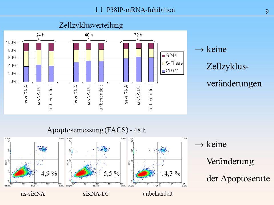 1.1 P38IP-mRNA-Inhibition Zellzyklusverteilung keine Zellzyklus- veränderungen 9 unbehandelt siRNA-D5 5,5 % ns-siRNA 4,9 %4,3 % Apoptosemessung (FACS) - 48 h keine Veränderung der Apoptoserate