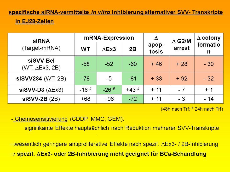 spezifische siRNA-vermittelte in vitro Inhibierung alternativer SVV- Transkripte in EJ28-Zellen siRNA (Target-mRNA) mRNA-Expression apop- tosis G2/M a