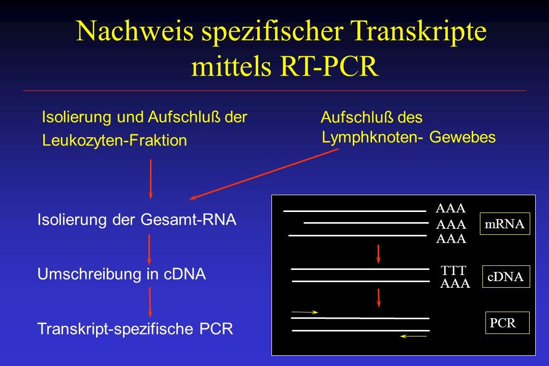 Nachweis spezifischer Transkripte mittels RT-PCR Isolierung und Aufschluß der Leukozyten-Fraktion Aufschluß des Lymphknoten- Gewebes Isolierung der Ge