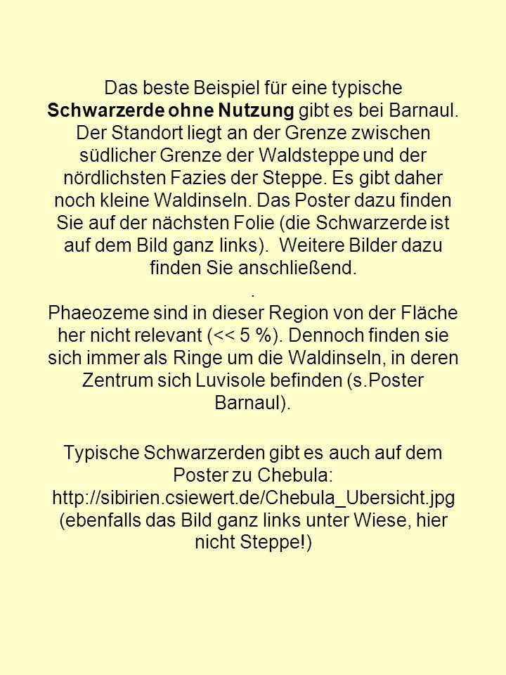 Das beste Beispiel für eine typische Schwarzerde ohne Nutzung gibt es bei Barnaul. Der Standort liegt an der Grenze zwischen südlicher Grenze der Wald