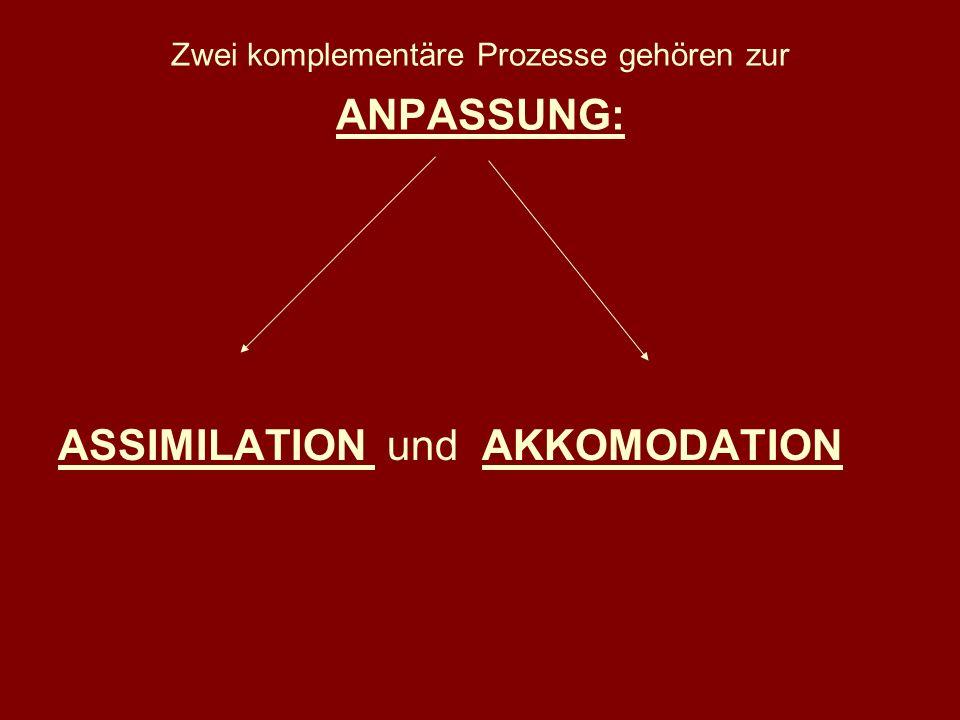 Zwei komplementäre Prozesse gehören zur ANPASSUNG: ASSIMILATION und AKKOMODATION