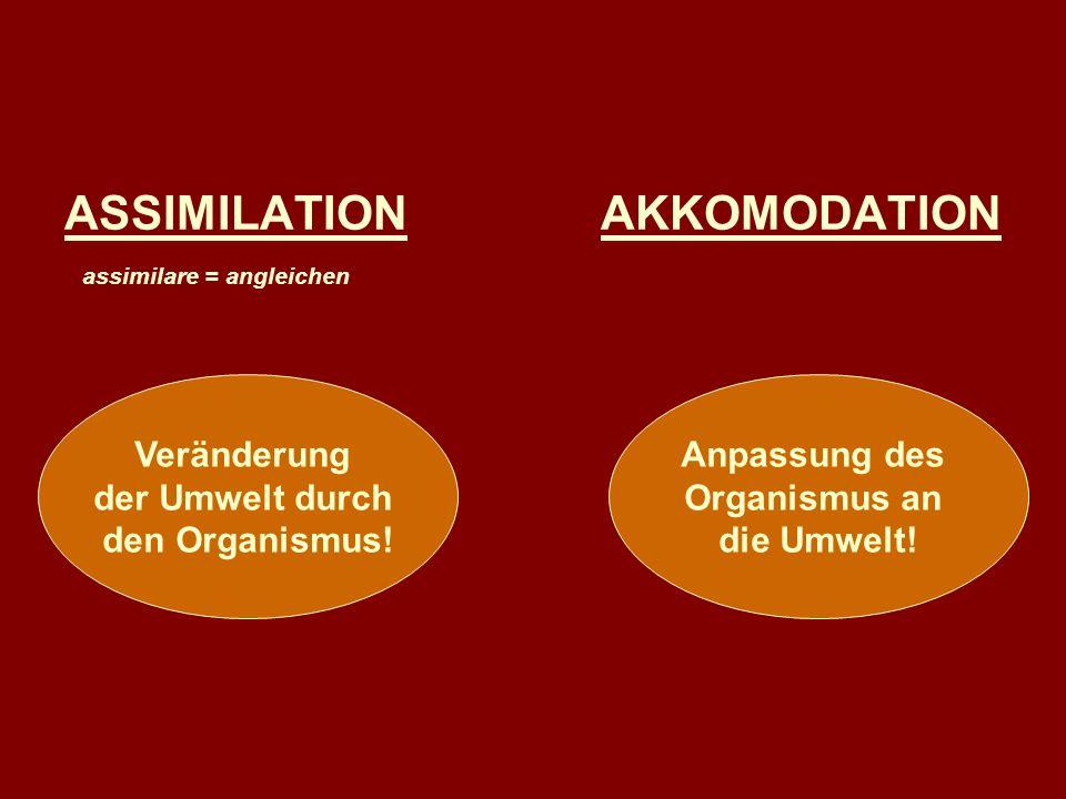 ASSIMILATION AKKOMODATION assimilare = angleichen Veränderung der Umwelt durch den Organismus! Anpassung des Organismus an die Umwelt!