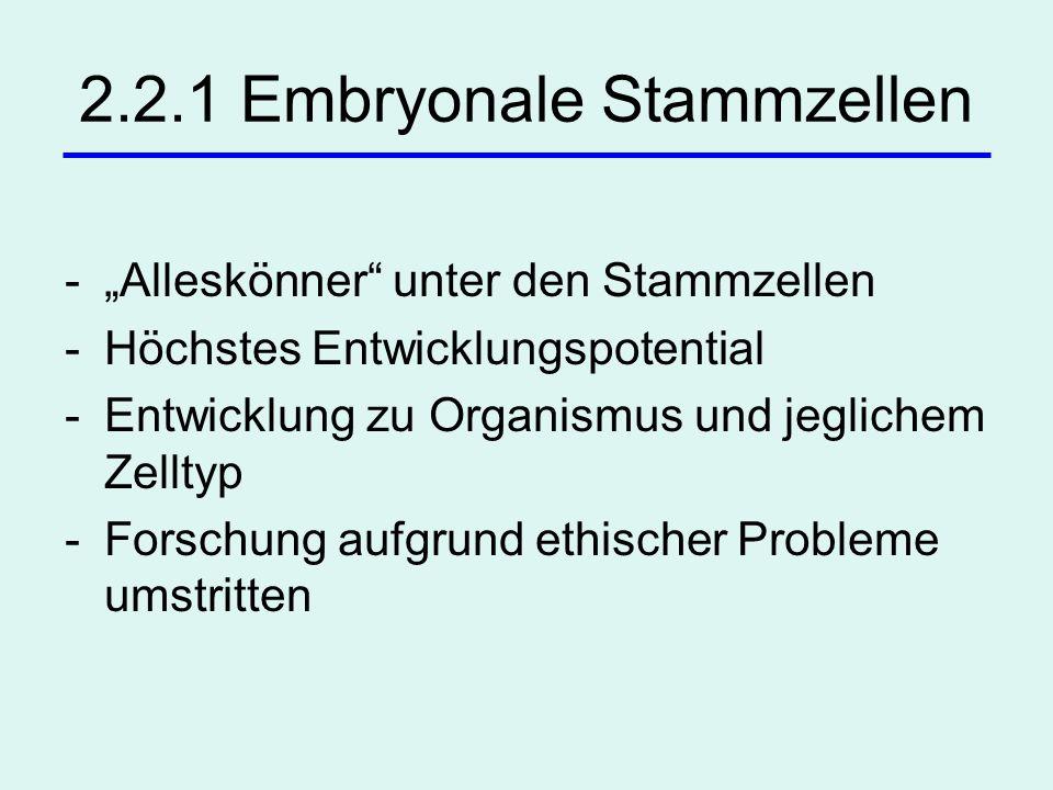 2.2.1 Embryonale Stammzellen -Alleskönner unter den Stammzellen -Höchstes Entwicklungspotential -Entwicklung zu Organismus und jeglichem Zelltyp -Fors
