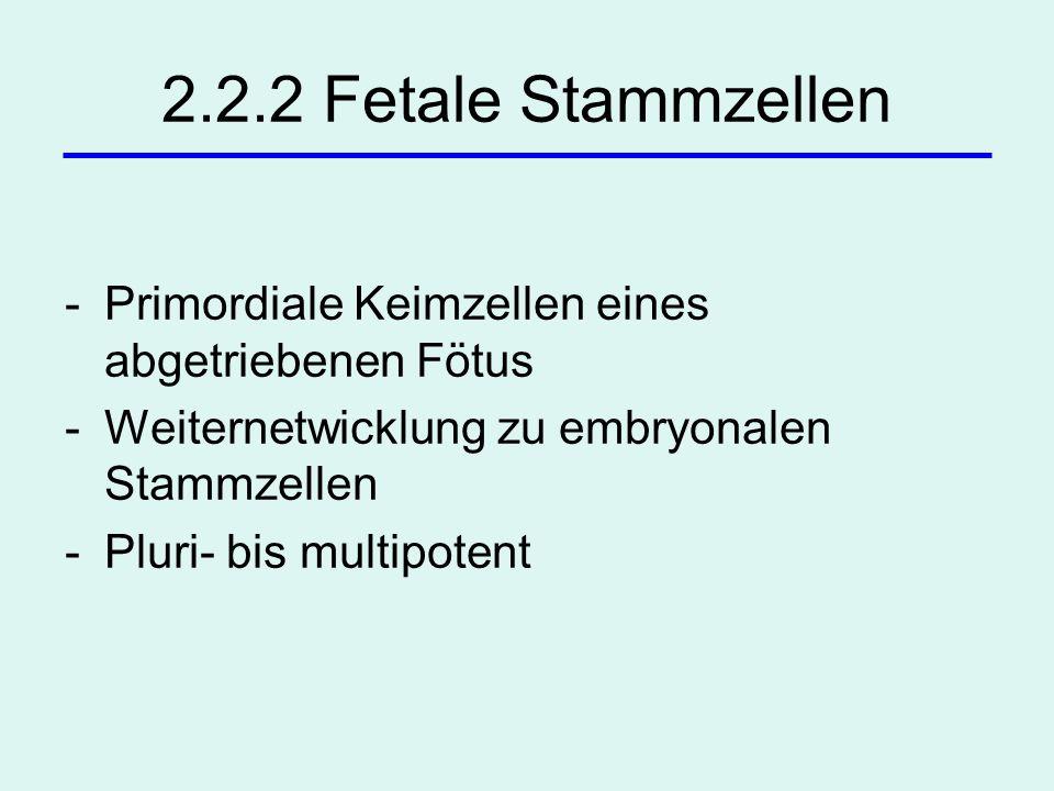 2.2.2 Fetale Stammzellen -Primordiale Keimzellen eines abgetriebenen Fötus -Weiternetwicklung zu embryonalen Stammzellen -Pluri- bis multipotent