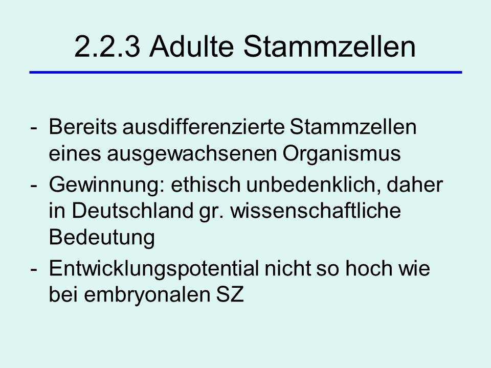 2.2.3 Adulte Stammzellen -Bereits ausdifferenzierte Stammzellen eines ausgewachsenen Organismus -Gewinnung: ethisch unbedenklich, daher in Deutschland