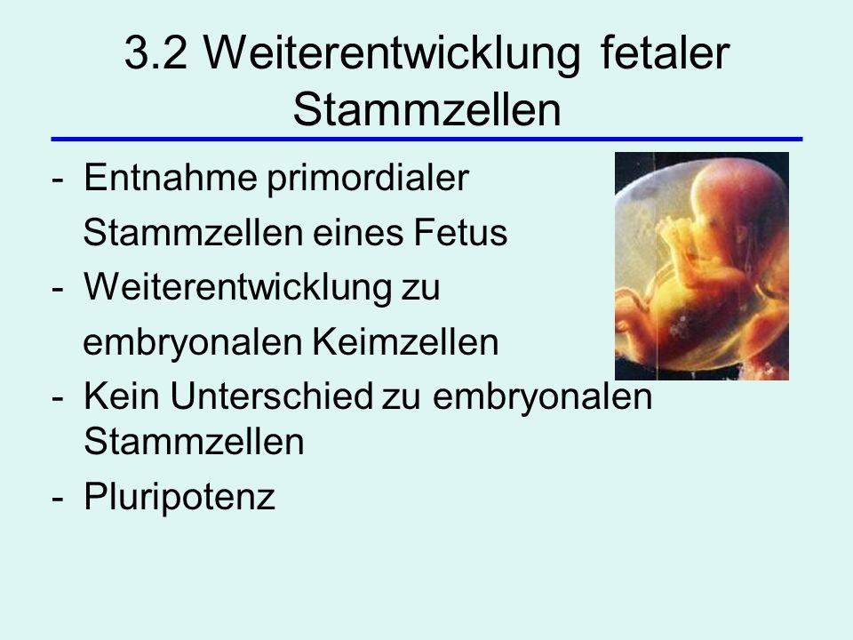 3.2 Weiterentwicklung fetaler Stammzellen -Entnahme primordialer Stammzellen eines Fetus -Weiterentwicklung zu embryonalen Keimzellen -Kein Unterschie