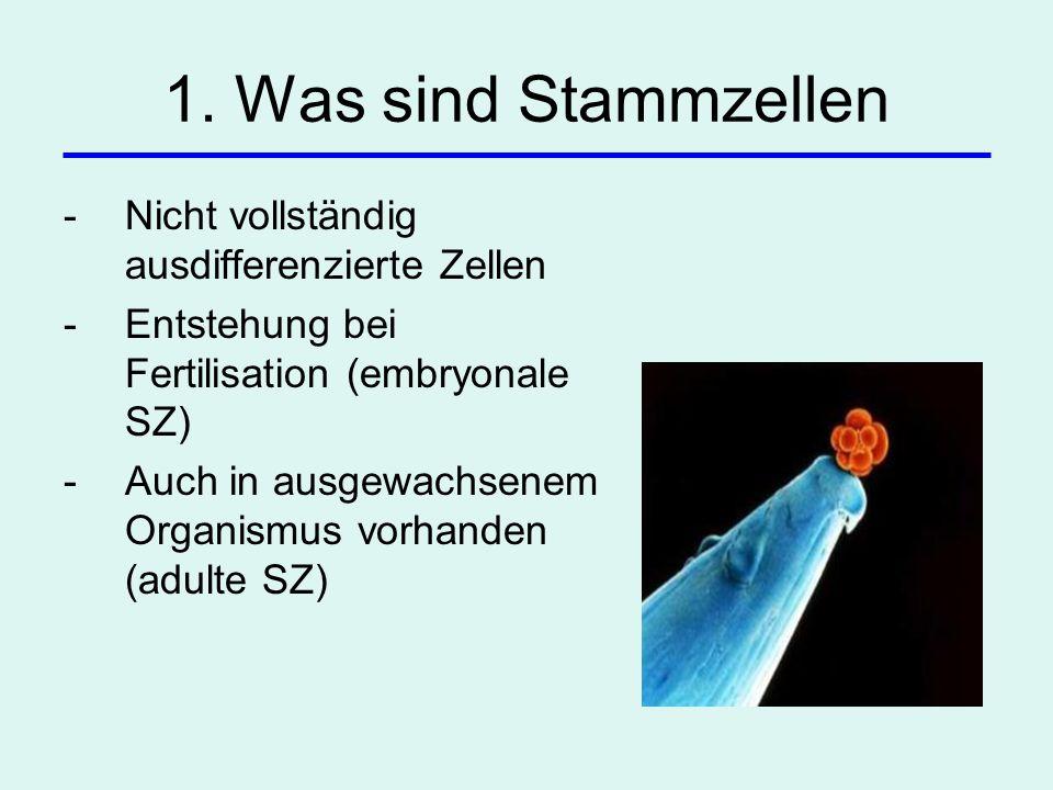 1. Was sind Stammzellen -Nicht vollständig ausdifferenzierte Zellen -Entstehung bei Fertilisation (embryonale SZ) -Auch in ausgewachsenem Organismus v