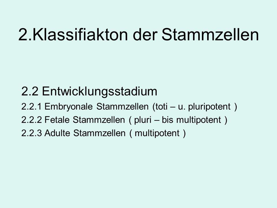 2.Klassifiakton der Stammzellen 2.2 Entwicklungsstadium 2.2.1 Embryonale Stammzellen (toti – u. pluripotent ) 2.2.2 Fetale Stammzellen ( pluri – bis m
