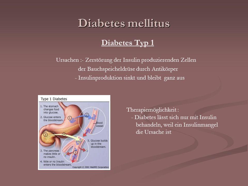 Diabetes mellitus Diabetes Typ 1 Ursachen :- Zerstörung der Insulin produzierenden Zellen der Bauchspeicheldrüse durch Antikörper - Insulinproduktion