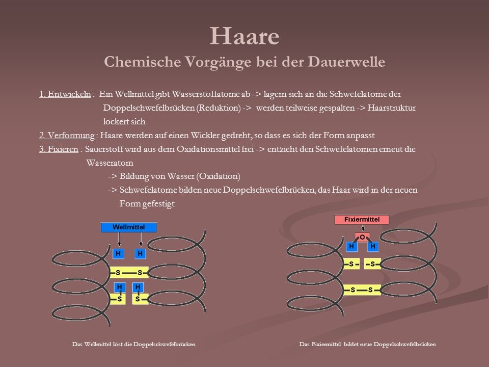 Haare Chemische Vorgänge bei der Dauerwelle 1. Entwickeln : Ein Wellmittel gibt Wasserstoffatome ab -> lagern sich an die Schwefelatome der Doppelschw