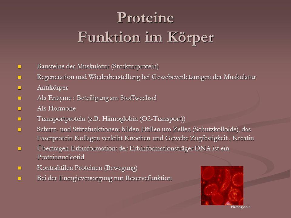Proteine Funktion im Körper Bausteine der Muskulatur (Strukturprotein) Bausteine der Muskulatur (Strukturprotein) Regeneration und Wiederherstellung b