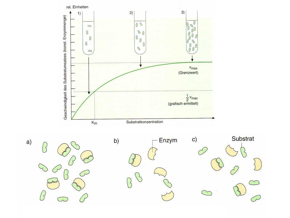 - niedrige Substratkonzentration nicht alle Enzyme sind mit Substrat beladen, da die Wahrscheinlichkeit, dass Enzym und Substrat aufeinander treffen gering ist - mit zunehmender Anzahl an Substrat steigt die Wahrscheinlichkeit, auf das Enzym zu treffen Reaktionsgeschwindigkeit steigt - bei hoher Konzentration ist die Wahrscheinlichkeit des Zusammentreffens zwar sehr hoch, jedoch können die Substratmoleküle, das aktive Zentrum nicht besetzen, da sich dort das Produkt der vorigen Reaktion erst langsam vom Enzym trennt.