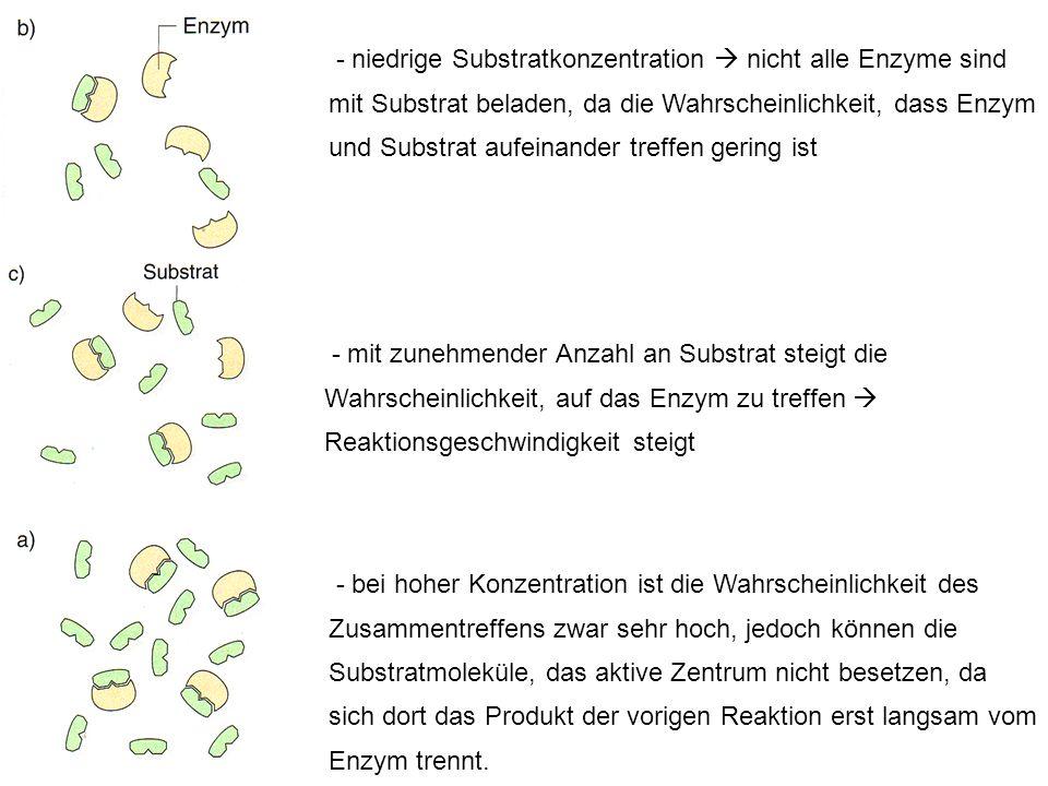 - niedrige Substratkonzentration nicht alle Enzyme sind mit Substrat beladen, da die Wahrscheinlichkeit, dass Enzym und Substrat aufeinander treffen g