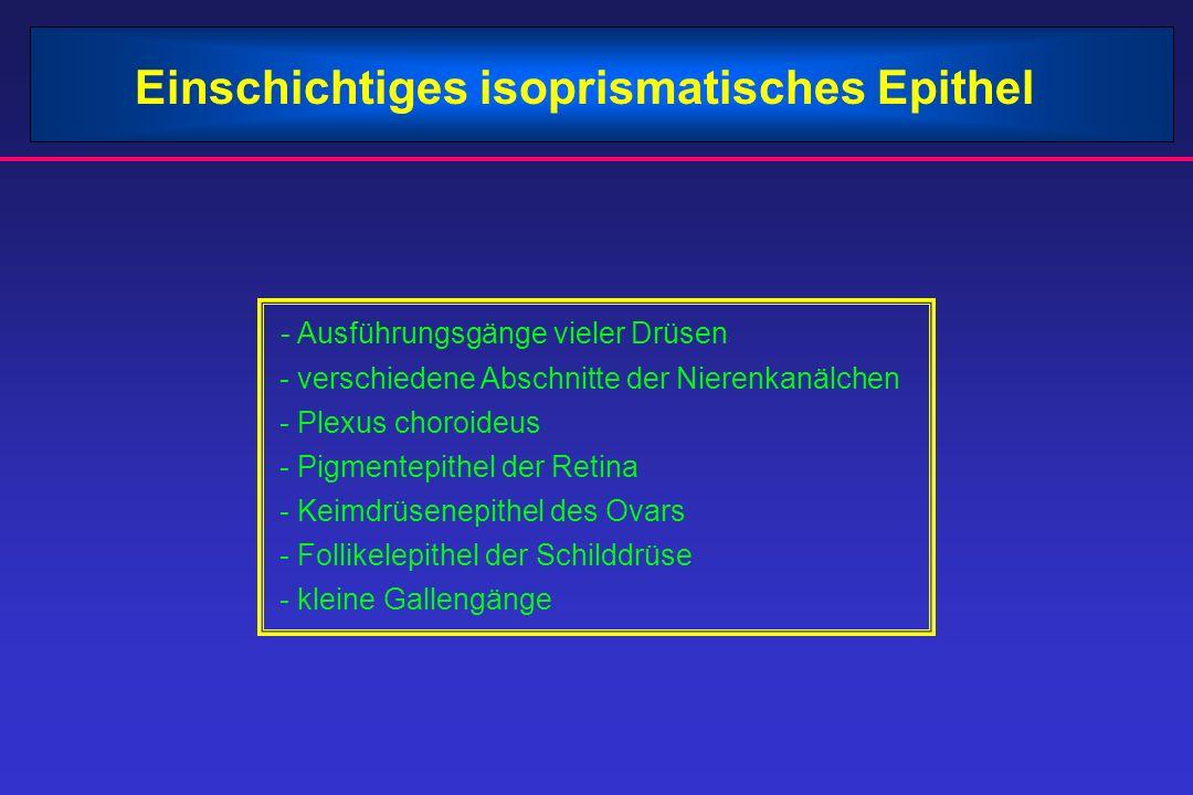 Einschichtiges isoprismatisches Epithel - Ausführungsgänge vieler Drüsen - verschiedene Abschnitte der Nierenkanälchen - Plexus choroideus - Pigmentep
