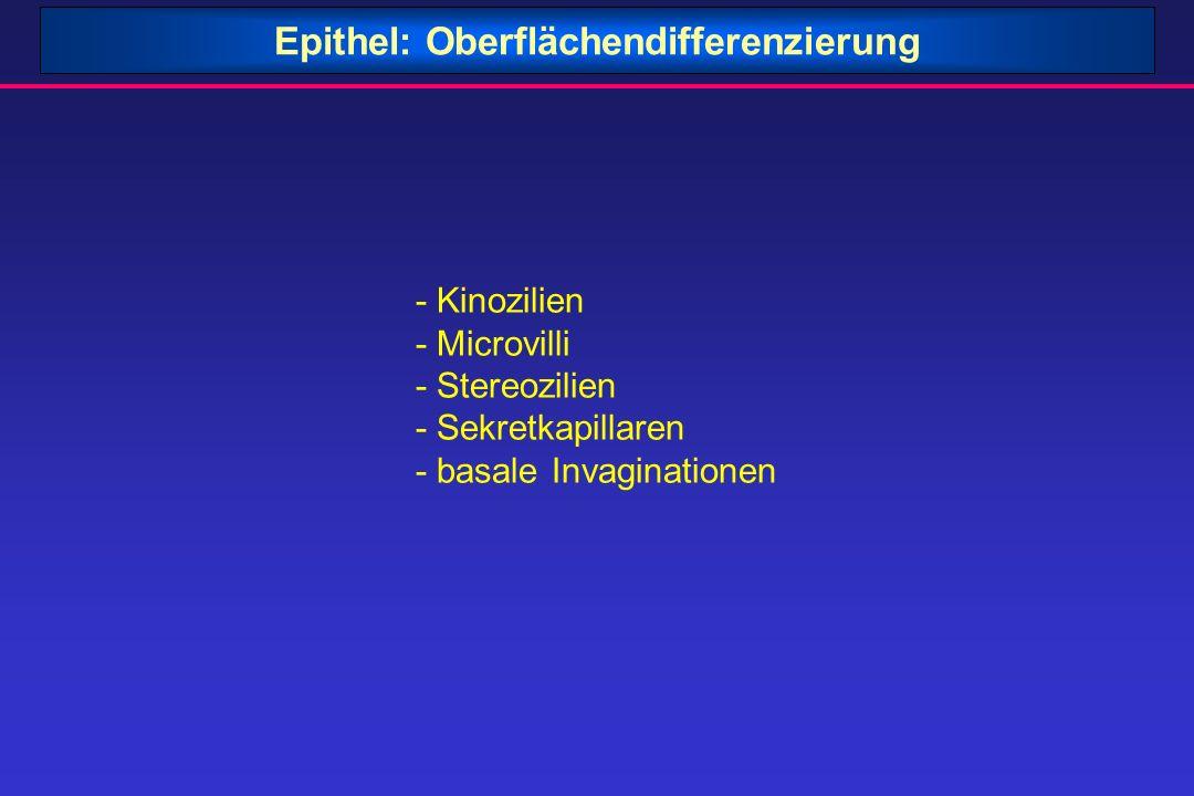 Epithel: Oberflächendifferenzierung - Kinozilien - Microvilli - Stereozilien - Sekretkapillaren - basale Invaginationen