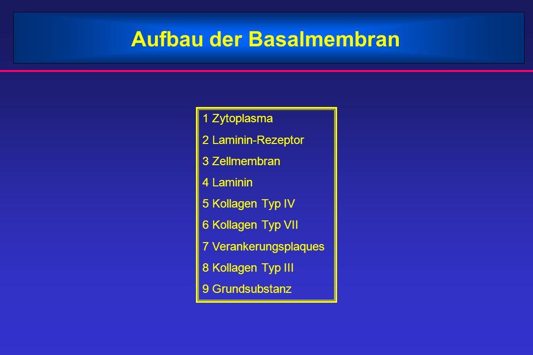 Aufbau der Basalmembran 1 Zytoplasma 2 Laminin-Rezeptor 3 Zellmembran 4 Laminin 5 Kollagen Typ IV 6 Kollagen Typ VII 7 Verankerungsplaques 8 Kollagen