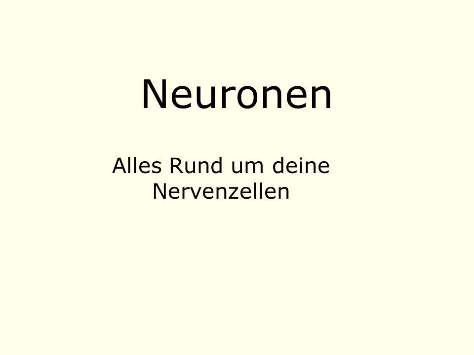 Neuronen Alles Rund um deine Nervenzellen