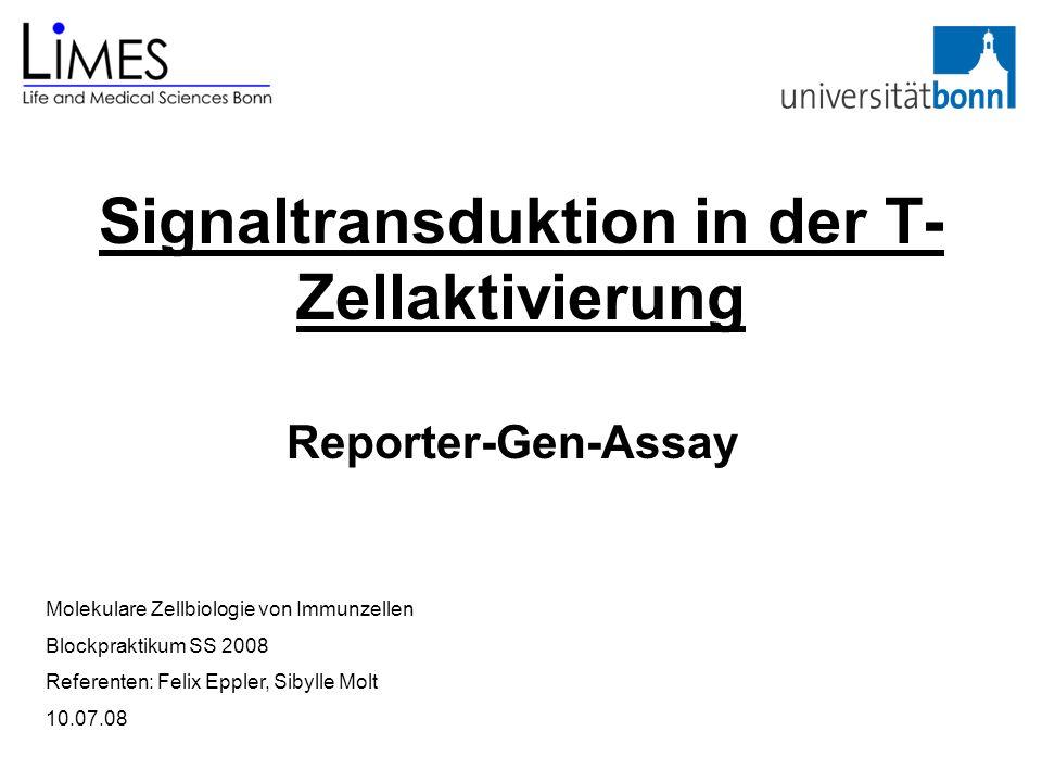 Signaltransduktion in der T- Zellaktivierung Reporter-Gen-Assay Molekulare Zellbiologie von Immunzellen Blockpraktikum SS 2008 Referenten: Felix Epple