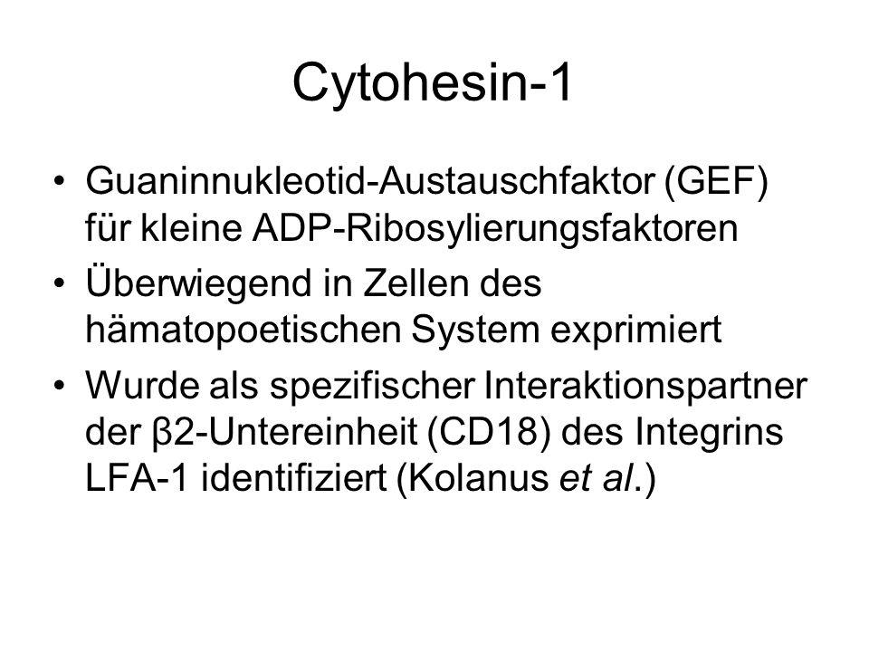 Cytohesin-1 Guaninnukleotid-Austauschfaktor (GEF) für kleine ADP-Ribosylierungsfaktoren Überwiegend in Zellen des hämatopoetischen System exprimiert W